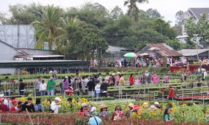หมู่บ้านปลูกดอกไม้เข้าสู่ฤดูตรุษเต๊ต