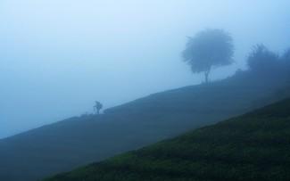 "Amazing photos of ""Lonely Trees"" in Vietnam"