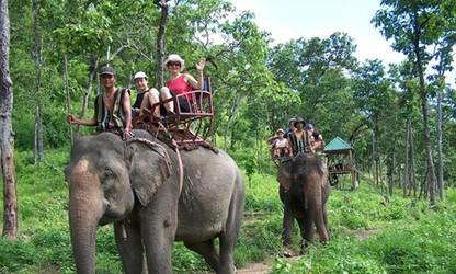 テイグエン地方の象文化