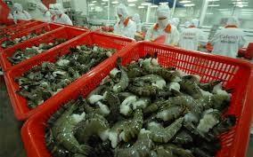 日本是越南最大的虾出口市场