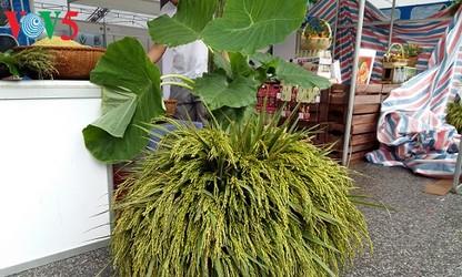 Grüne Reisflocken aus Me Tri – eine Spezialität Hanois