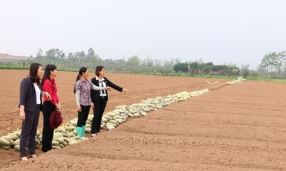 Bac Ninh supports women's startups
