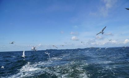 Thính giả muốn được thông tin về môt số địa điểm du lịch tại Phú Quốc, xem cảnh hải âu săn mồi trên biển