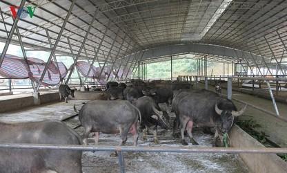 Mô hình nông nghiệp sạch lớn nhất tỉnh Yên Bái