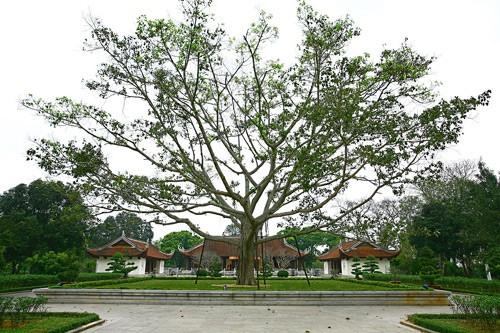 Desa Kim Lien-Kampung halaman Presiden Ho Chi Minh