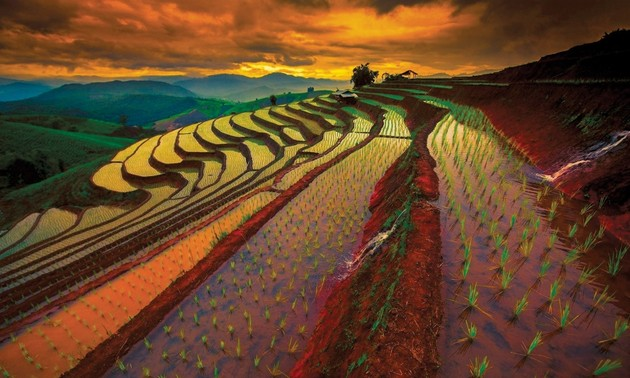 Thailand mengembangkan pertanian 4.0