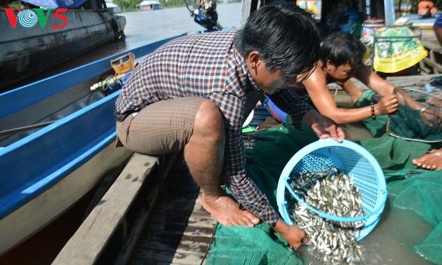 Mekong Delta in flood season