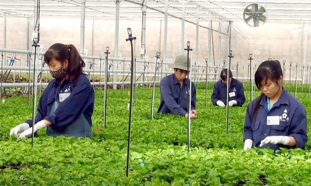 High-tech farming model helps farmers escape poverty