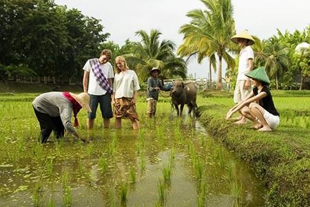 Penjelasan tentang jasa homestay di Vietnam