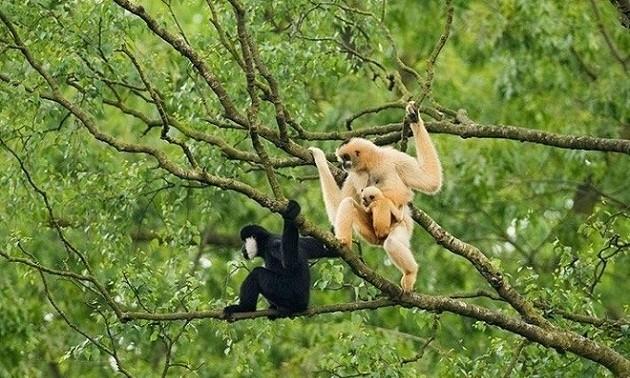 Национальный парк Пумат в провинции Нгеан