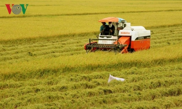 Vietnam needs new vision for rice production