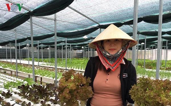 广南省维川县青年以高技术蔬菜种植模式创业