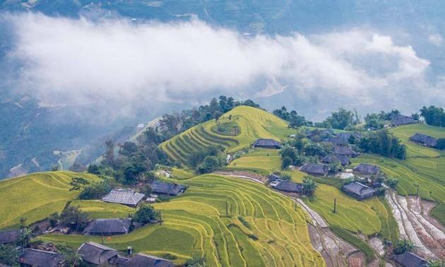 Terrazas de arroz de Hoang Su Phi, una creación genial de los étnicos locales