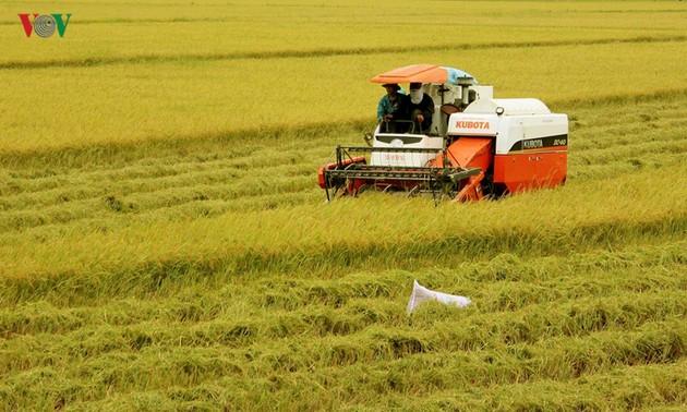 베트남 쌀 생산의 새로운 비전