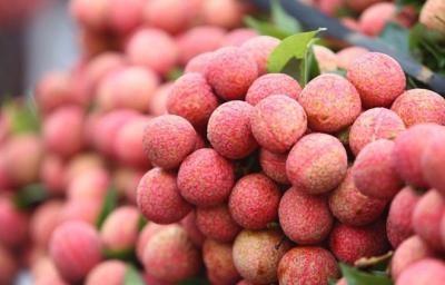 Nông dân Bắc Giang bội thu mùa vải thiều 201