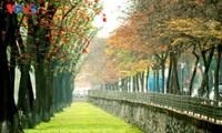 El otoño hanoyense