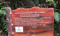 Khám phá địa đạo Bạch Mã - Di tích lịch sử cấp Quốc gia