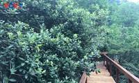 Đảo soi sim, vẻ đẹp hoang sơ trên Vịnh Hạ Long