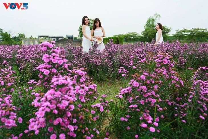 Ngắm thảo nguyên hoa giữa lòng Hà Nội - ảnh 16