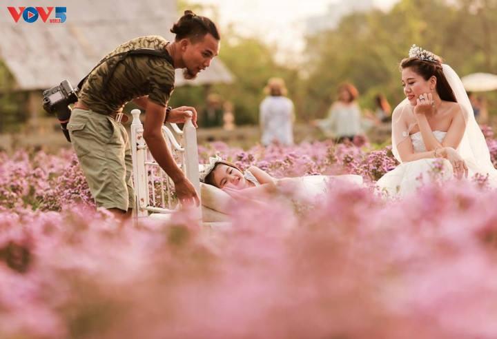 Ngắm thảo nguyên hoa giữa lòng Hà Nội - ảnh 19