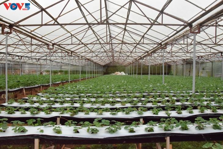 Zoom sur Dà Lat, capitale agricole du Vietnam - ảnh 10