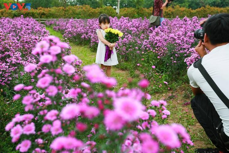 Ngắm thảo nguyên hoa giữa lòng Hà Nội - ảnh 17