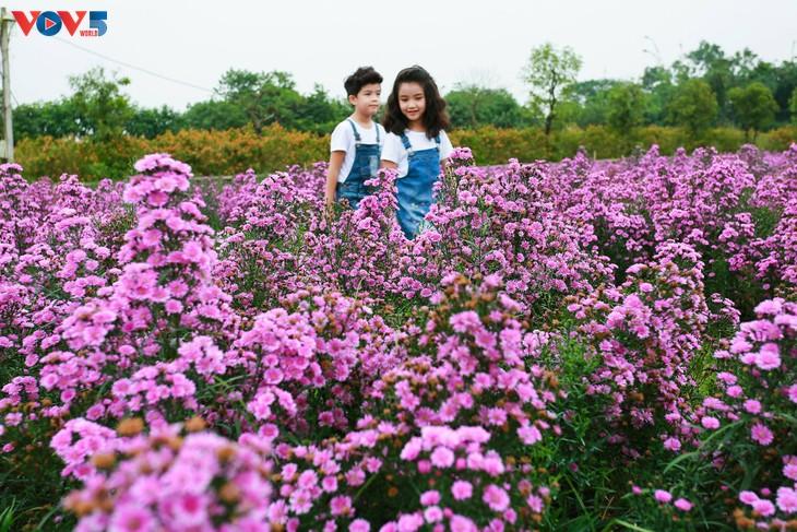 Ngắm thảo nguyên hoa giữa lòng Hà Nội - ảnh 15
