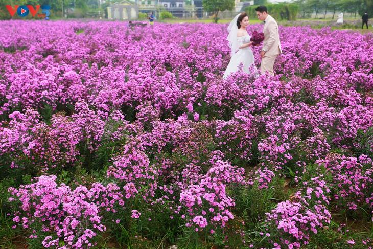 Ngắm thảo nguyên hoa giữa lòng Hà Nội - ảnh 14