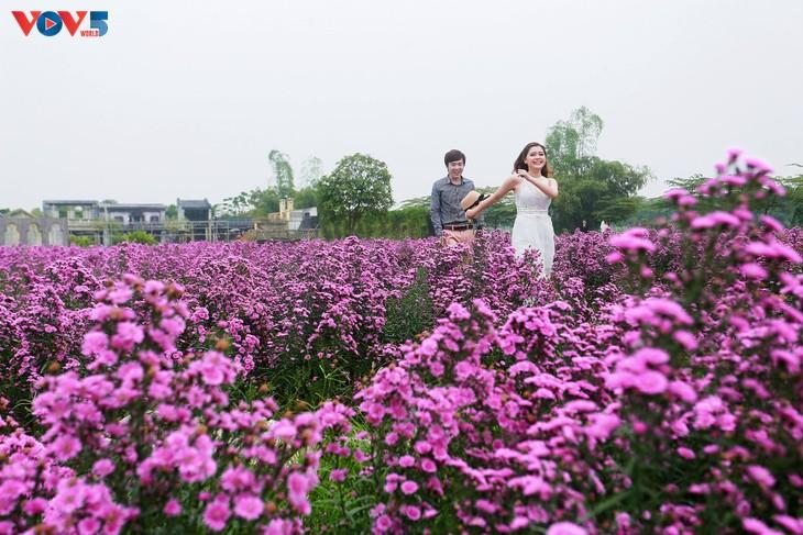 Ngắm thảo nguyên hoa giữa lòng Hà Nội - ảnh 13