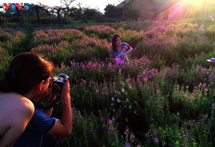 Ngắm thảo nguyên hoa giữa lòng Hà Nội - ảnh 18