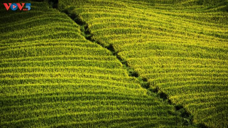 Tam Đường rực rỡ mùa vàng - ảnh 11