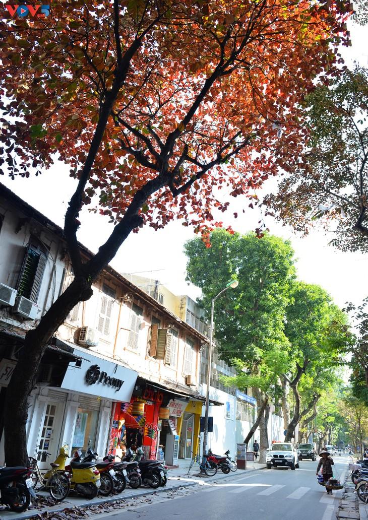 Hà Nội, mùa lá bàng chuyển màu - ảnh 5