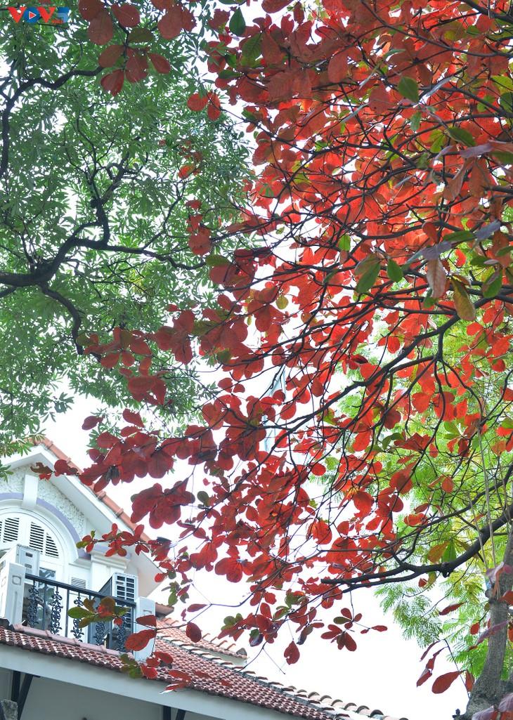 Hà Nội, mùa lá bàng chuyển màu - ảnh 4