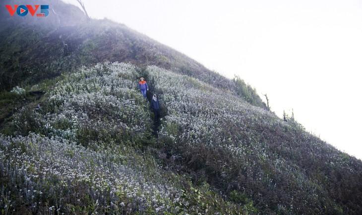 Lảo Thẩn, ngọn núi mang vẻ đẹp lãng du - ảnh 15