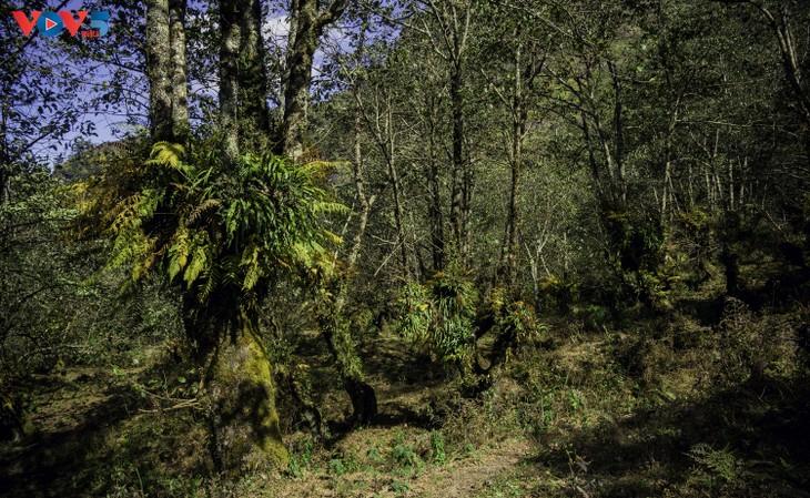 Lảo Thẩn, ngọn núi mang vẻ đẹp lãng du - ảnh 3