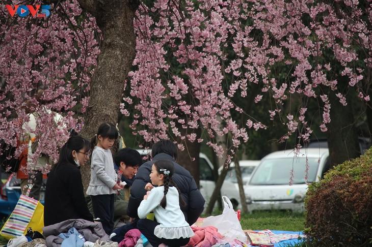 Chiêm ngưỡng con đường hoa anh đào dài nhất thế giới tại Nhật Bản - ảnh 6