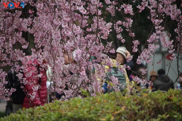 Chiêm ngưỡng con đường hoa anh đào dài nhất thế giới tại Nhật Bản - ảnh 7
