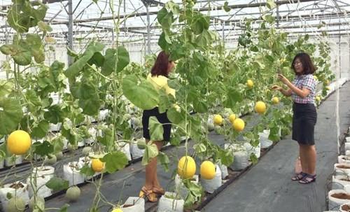fortschritte in der landwirtschaft