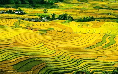 Mu Cang Chai rice terrace fields among the world's most colorful destinations - ảnh 1