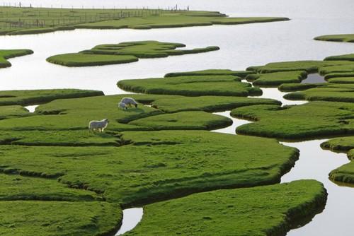 Mu Cang Chai rice terrace fields among the world's most colorful destinations - ảnh 4
