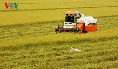 Vietnam needs new vision for rice production - ảnh 1