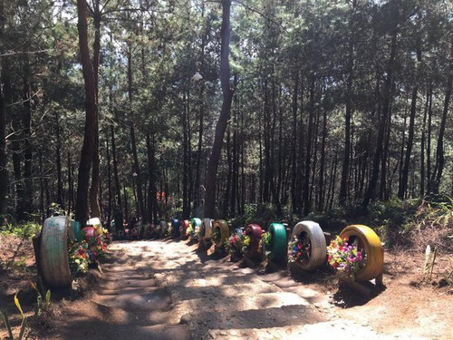 Sin Suoi Ho village, Ta Leng pine forest features magnificent scenery, ethnic culture - ảnh 4