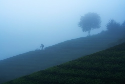 "Amazing photos of ""Lonely Trees"" in Vietnam - ảnh 12"