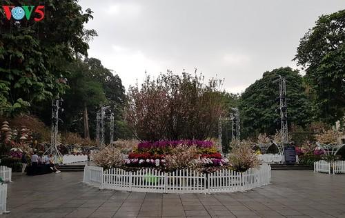 Hanoi people enjoy 2019 Japanese cherry blossom festival - ảnh 3