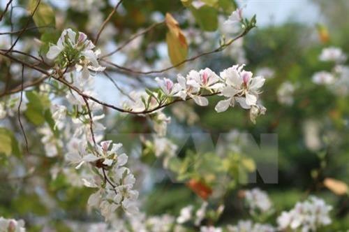 Ban flower festival promotes ethnic culture - ảnh 1