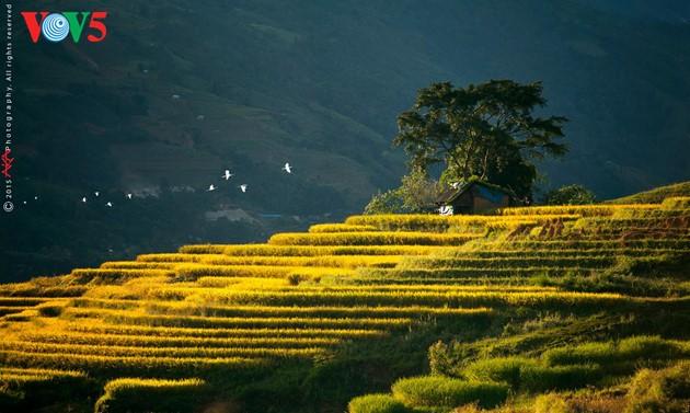 Les rizières en terrasse du Nord du Vietnam