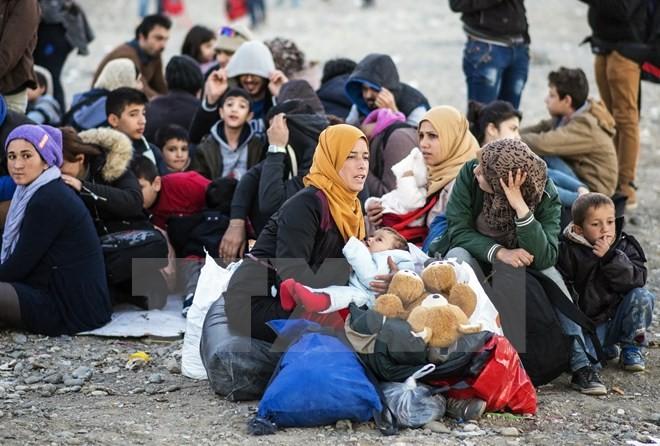 Australia menerima 500 pengungsi dari Suriah dan Irak - ảnh 1