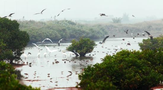 Taman Nasional Xuan Thuy -  Bumi baik tempat  burung  suka  bertengger - ảnh 2