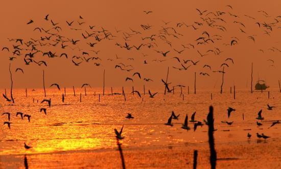 Taman Nasional Xuan Thuy -  Bumi baik tempat  burung  suka  bertengger - ảnh 6