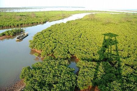 Taman Nasional Xuan Thuy -  Bumi baik tempat  burung  suka  bertengger - ảnh 1